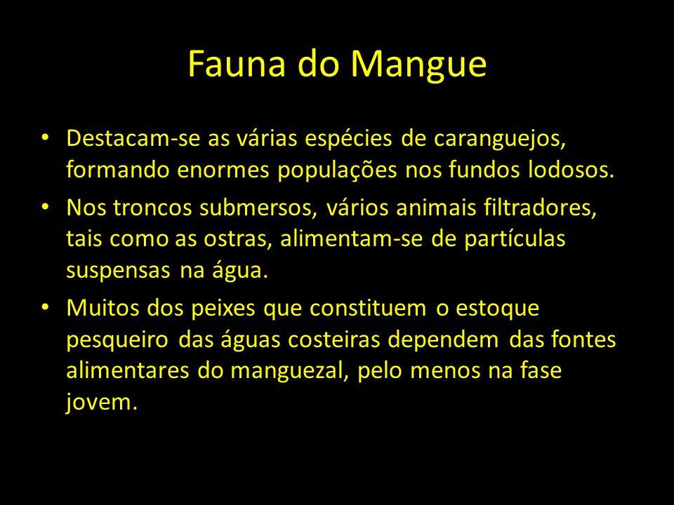 Fauna do Mangue Destacam-se as várias espécies de caranguejos, formando enormes populações nos fundos lodosos.