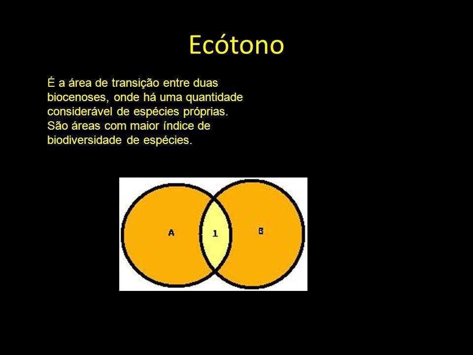 Ecótono É a área de transição entre duas biocenoses, onde há uma quantidade considerável de espécies próprias.