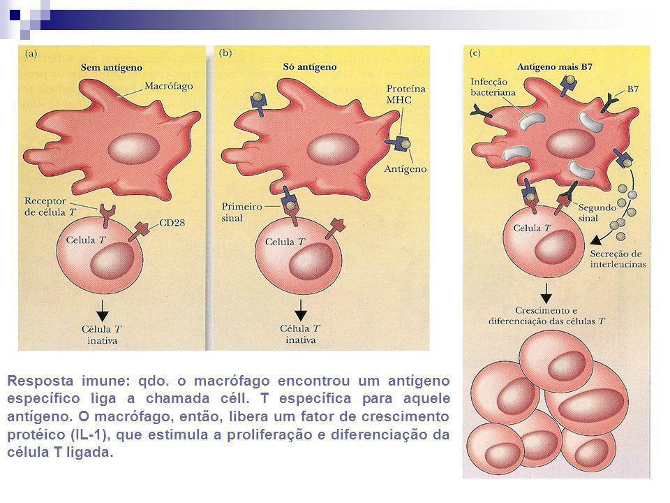 Resposta imune: qdo. o macrófago encontrou um antígeno específico liga a chamada céll.