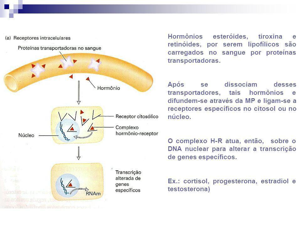 Hormônios esteróides, tiroxina e retinóides, por serem lipofílicos são carregados no sangue por proteínas transportadoras.