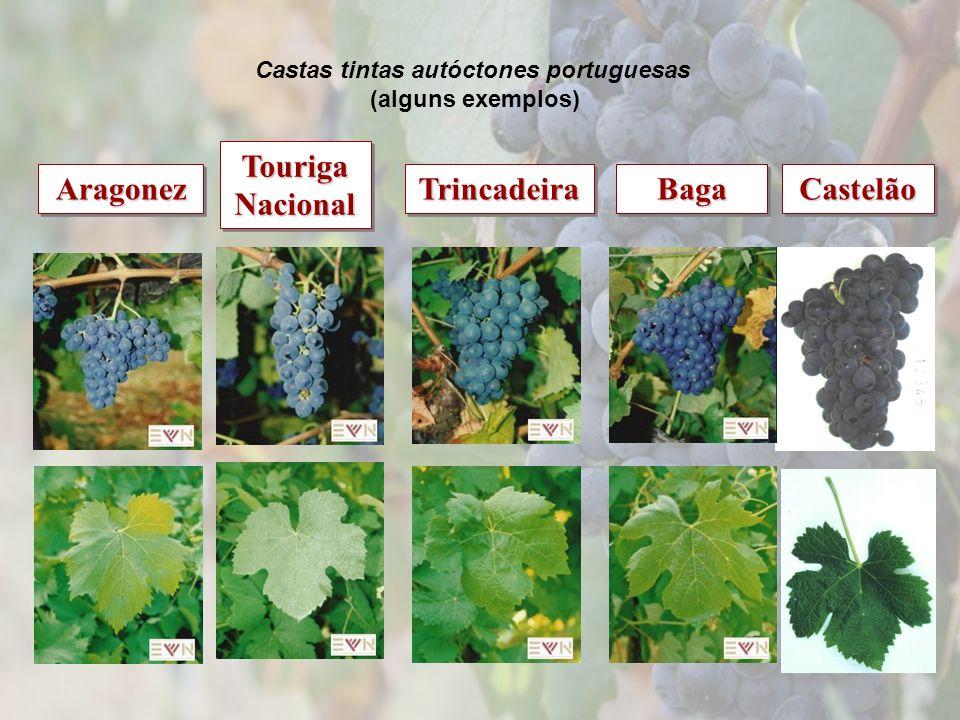 Castas tintas autóctones portuguesas