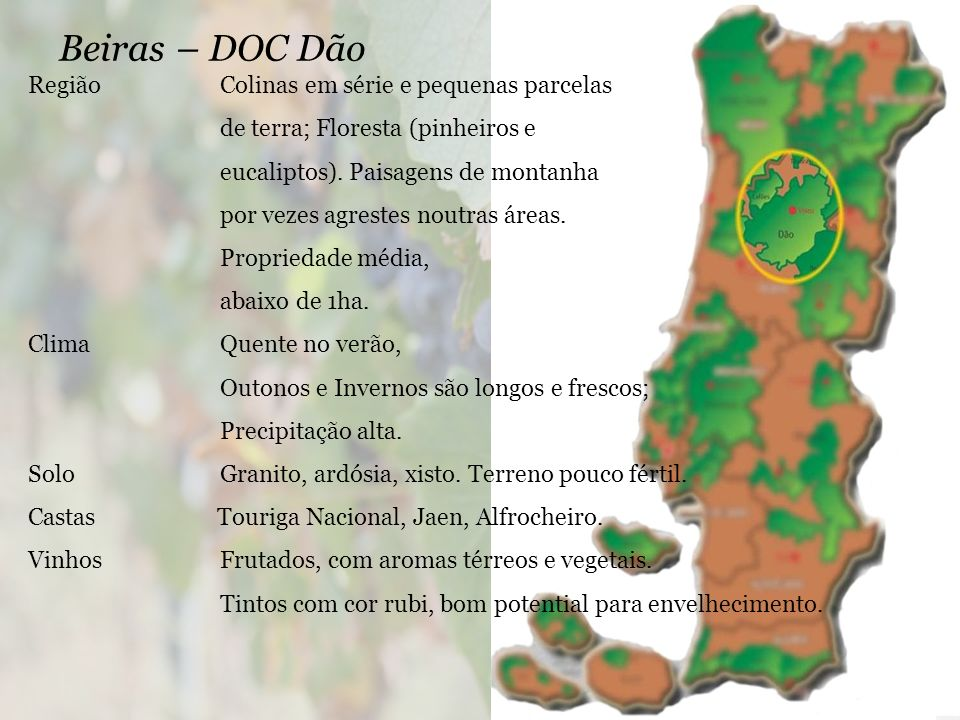 Beiras – DOC Dão Região Colinas em série e pequenas parcelas