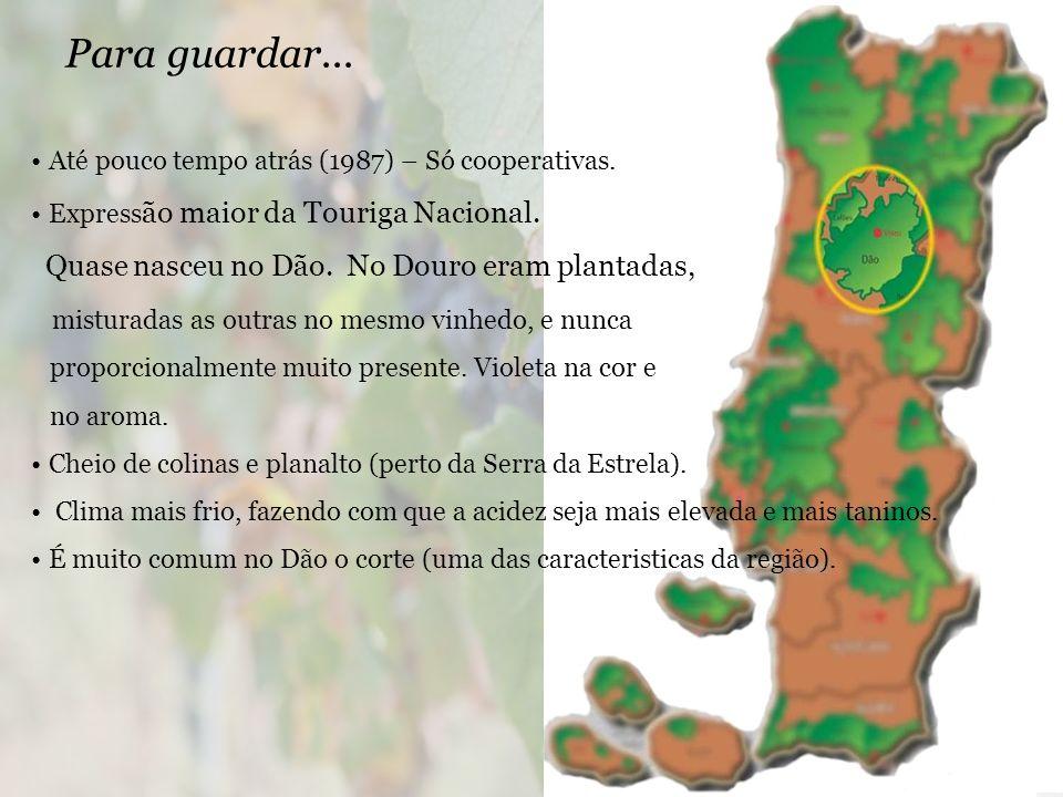 Para guardar... Quase nasceu no Dão. No Douro eram plantadas,