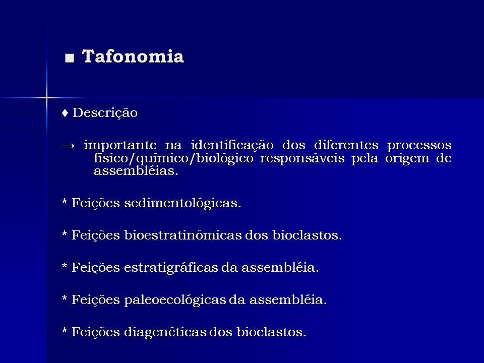 ■ Tafonomia ♦ Descrição
