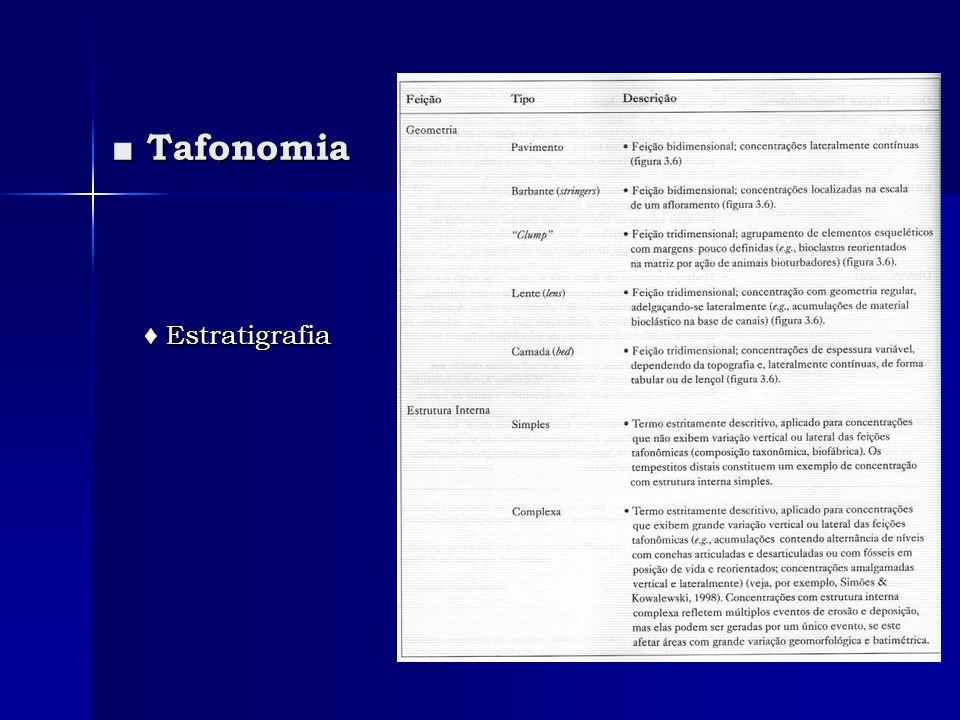 ■ Tafonomia ♦ Estratigrafia