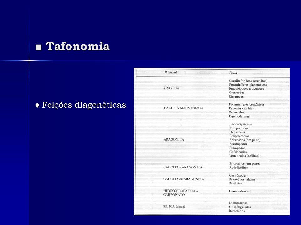 ■ Tafonomia ♦ Feições diagenéticas