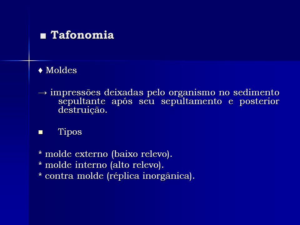 ■ Tafonomia ♦ Moldes. → impressões deixadas pelo organismo no sedimento sepultante após seu sepultamento e posterior destruição.