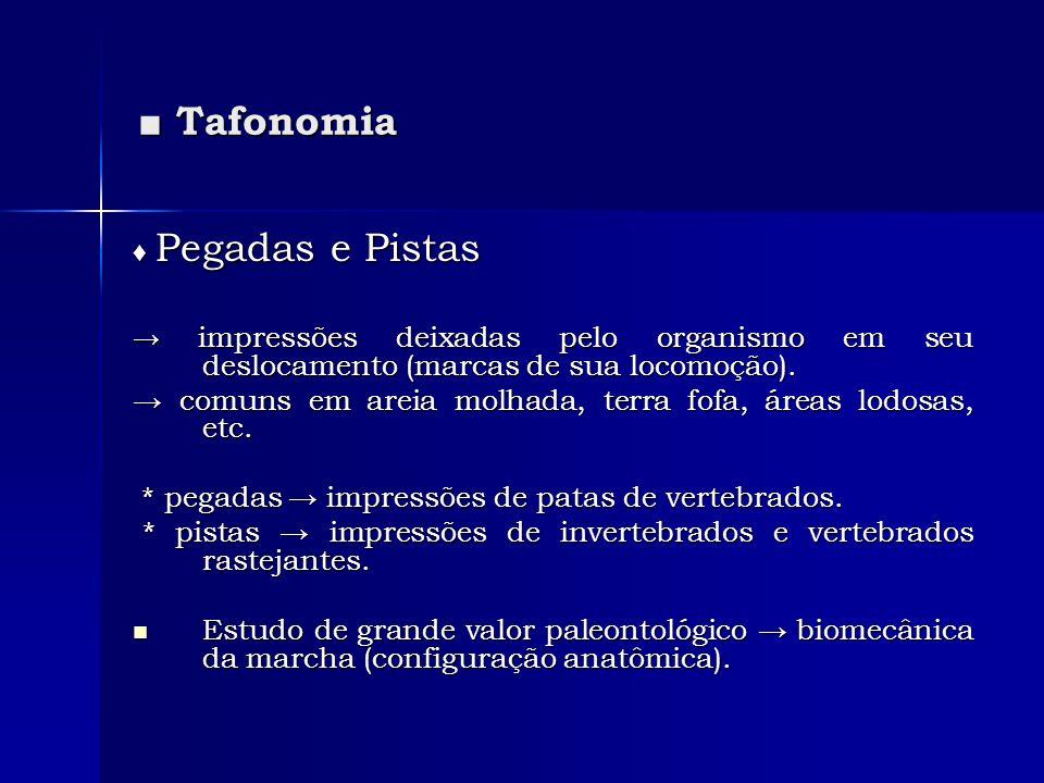 ■ Tafonomia → comuns em areia molhada, terra fofa, áreas lodosas, etc.