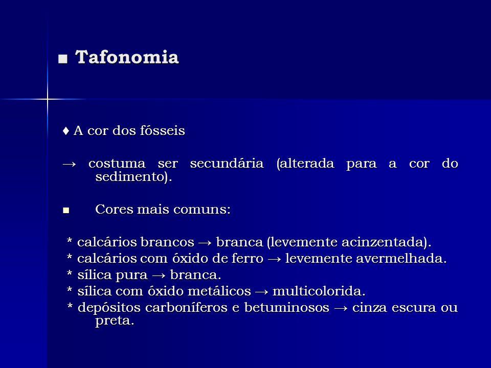 ■ Tafonomia ♦ A cor dos fósseis