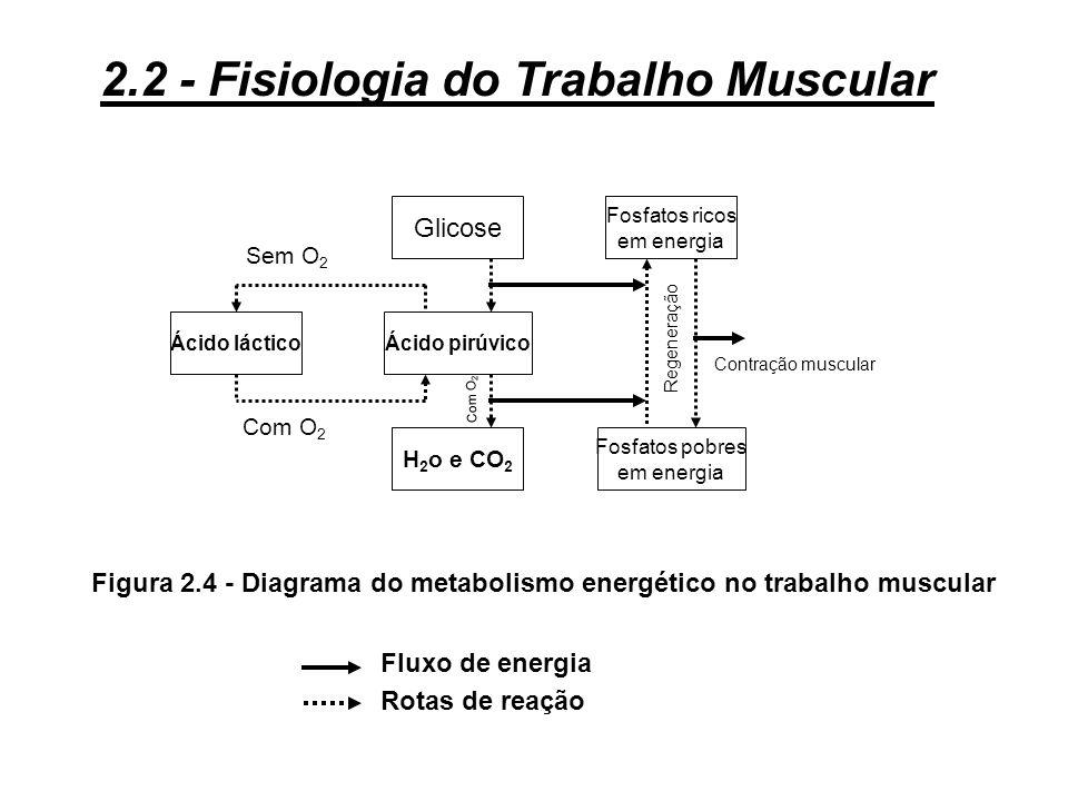 Figura 2.4 - Diagrama do metabolismo energético no trabalho muscular