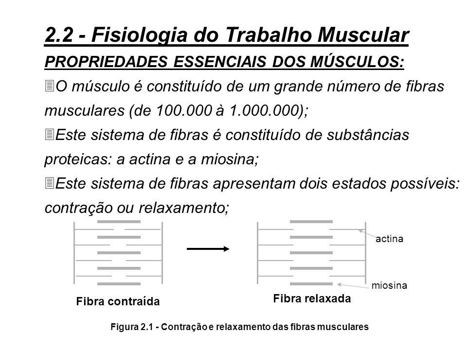 Figura 2.1 - Contração e relaxamento das fibras musculares