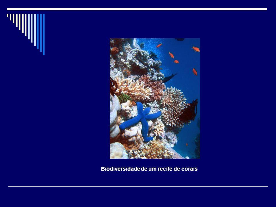 Biodiversidade de um recife de corais