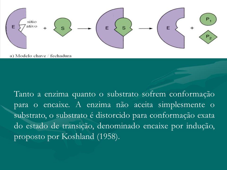 Tanto a enzima quanto o substrato sofrem conformação para o encaixe