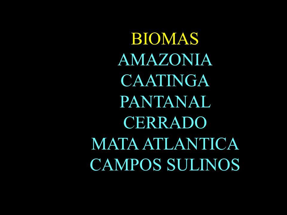 B BIOMAS AMAZONIA CAATINGA PANTANAL CERRADO MATA ATLANTICA CAMPOS SULINOS