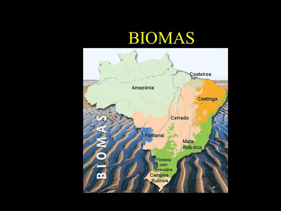B BIOMAS