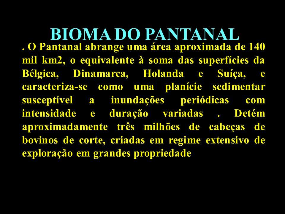 BIOMA DO PANTANAL