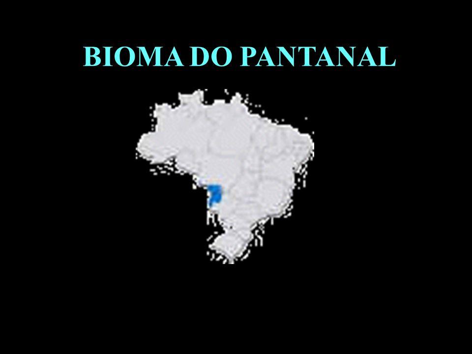 BIOMA DO PANTANAL Divisão em 02 continentes