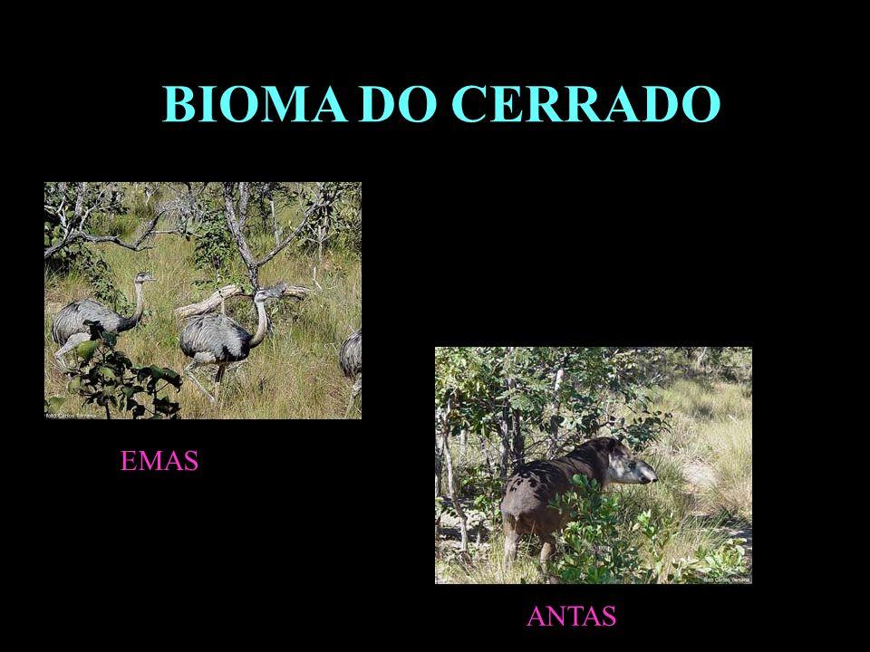 BIOMA DO CERRADO EMAS ANTAS