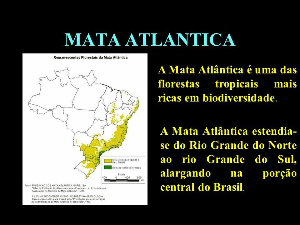 MATA ATLANTICA A Mata Atlântica é uma das florestas tropicais mais ricas em biodiversidade.