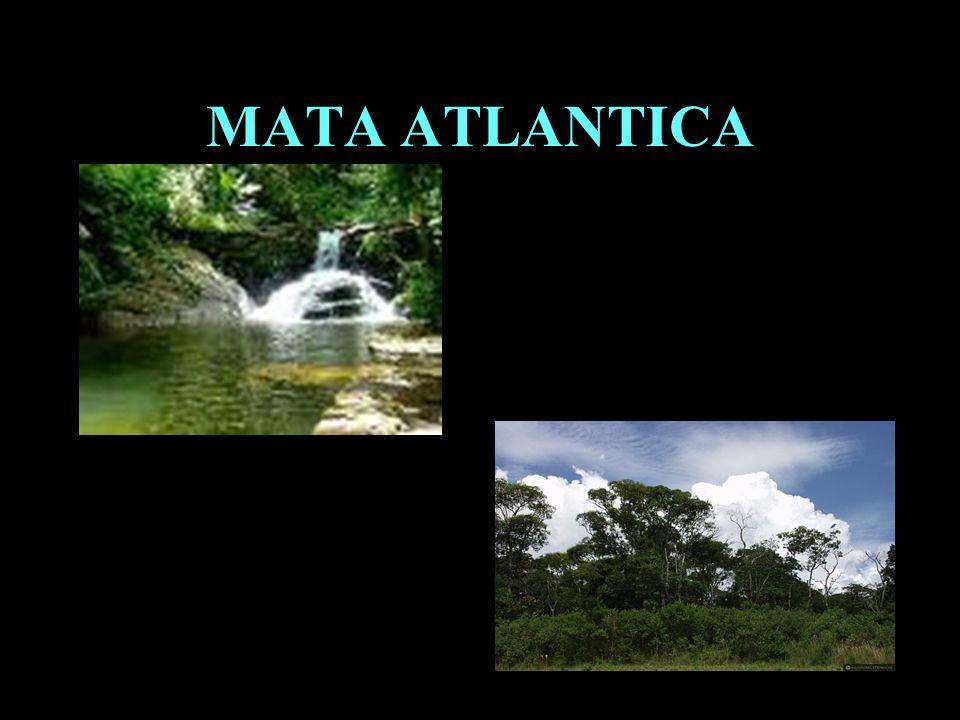 MATA ATLANTICA Divisão em 02 continentes