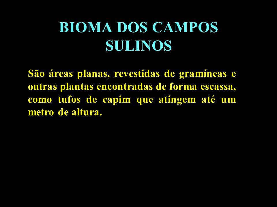 BIOMA DOS CAMPOS SULINOS