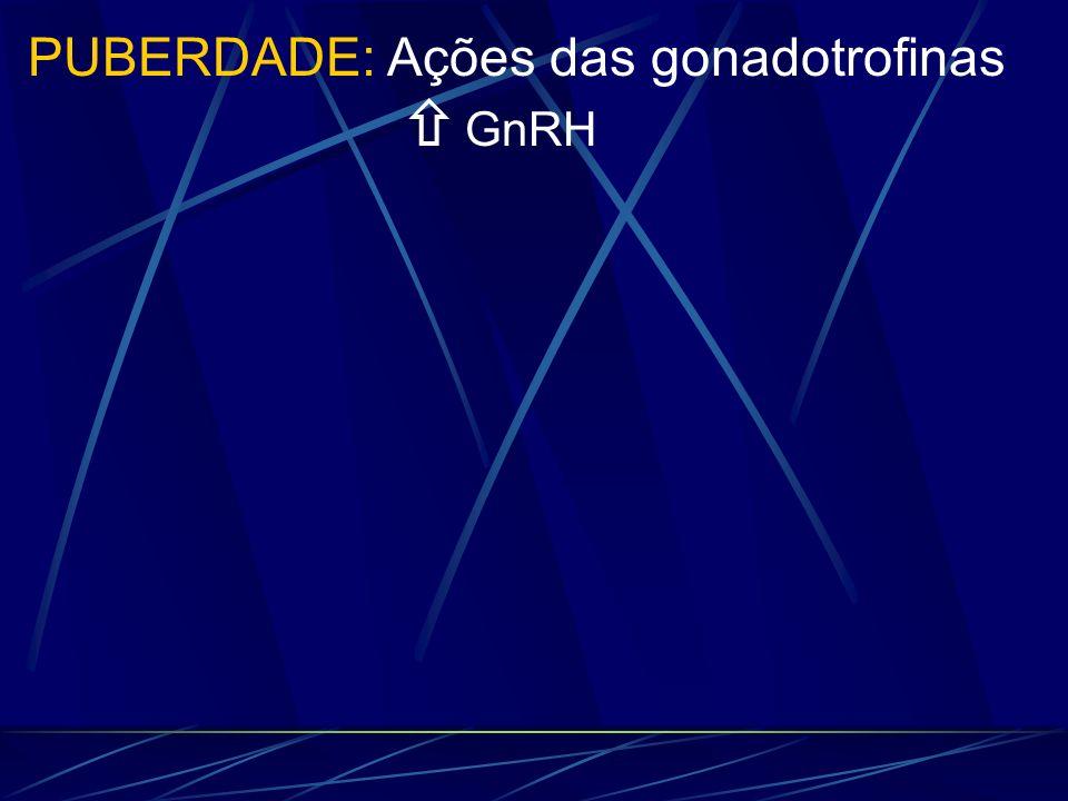PUBERDADE: Ações das gonadotrofinas