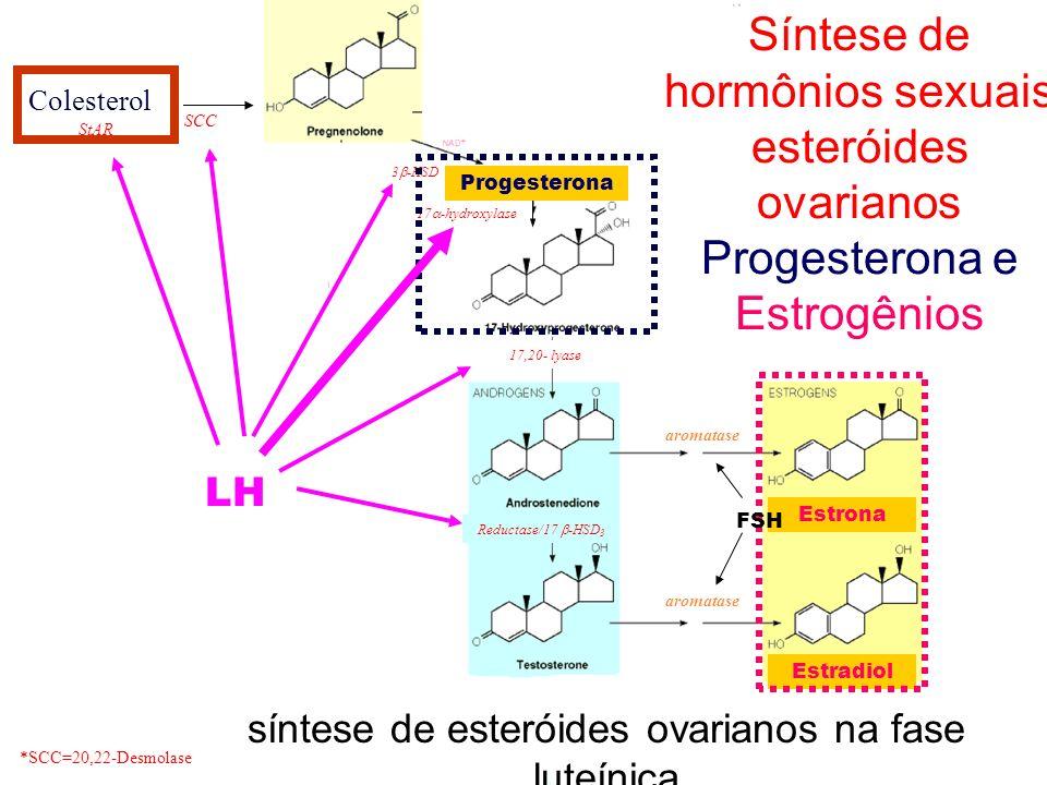 Síntese de hormônios sexuais esteróides ovarianos
