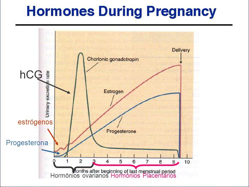 hCG estrógenos Progesterona Hormônios ovarianos Hormônios Placentários