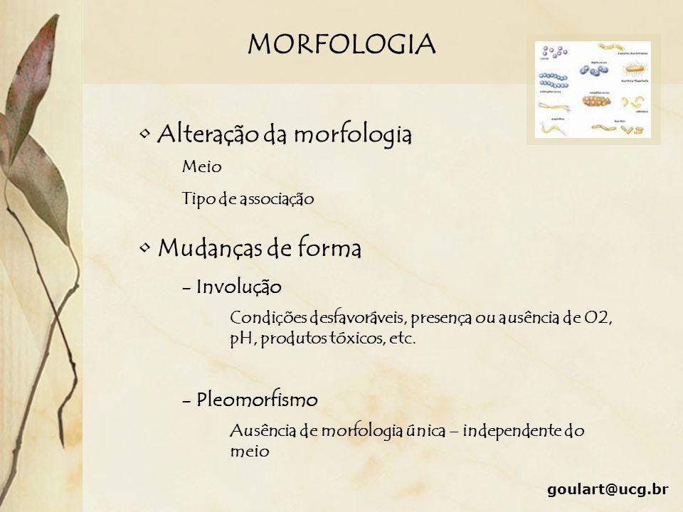 MORFOLOGIA Alteração da morfologia Mudanças de forma - Involução