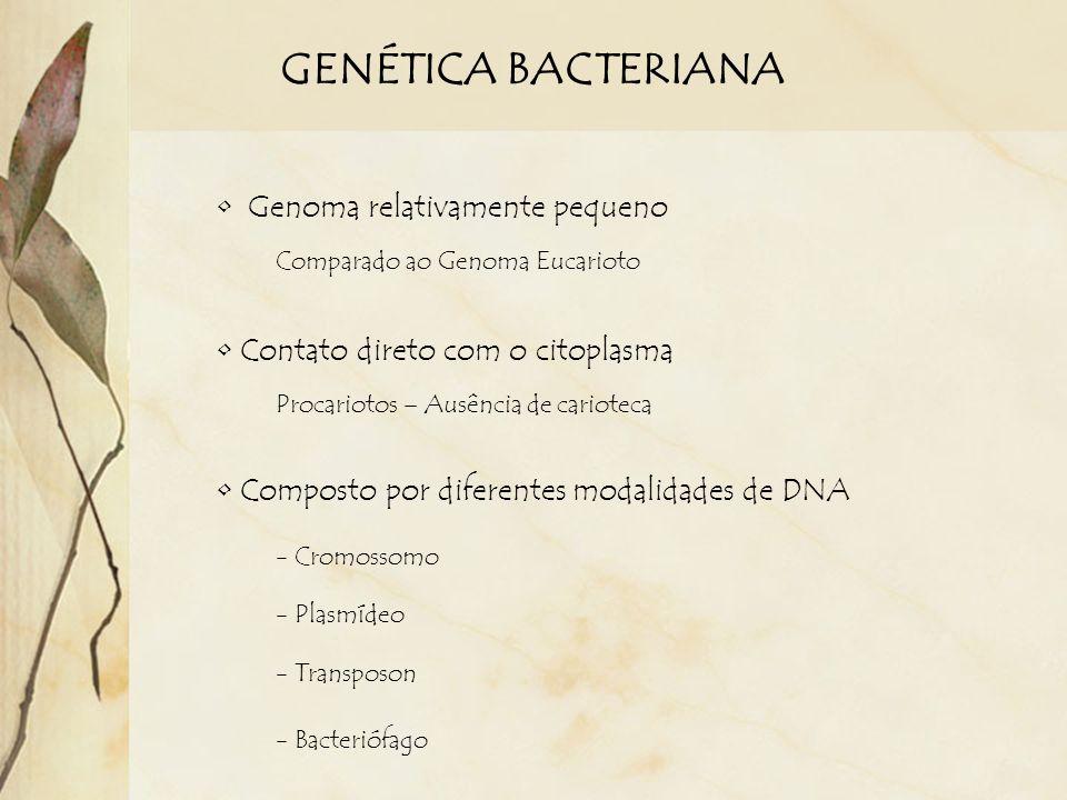 GENÉTICA BACTERIANA Genoma relativamente pequeno