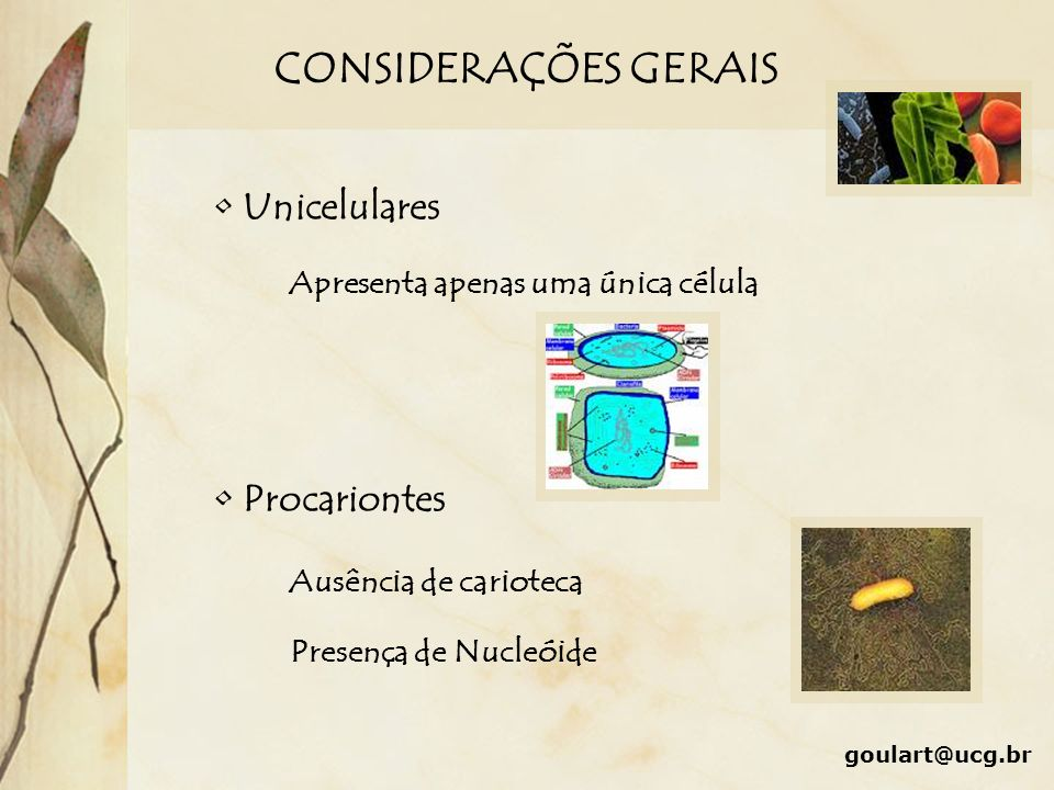 CONSIDERAÇÕES GERAIS Unicelulares Procariontes
