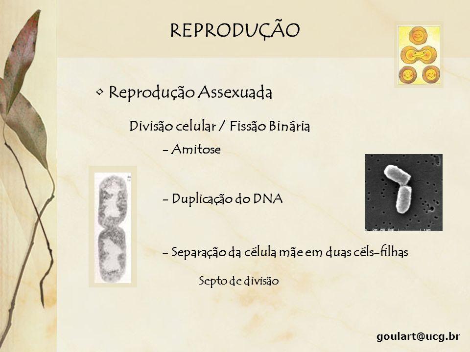 REPRODUÇÃO Reprodução Assexuada Divisão celular / Fissão Binária