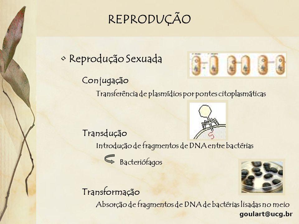 REPRODUÇÃO Reprodução Sexuada Conjugação Transdução Transformação