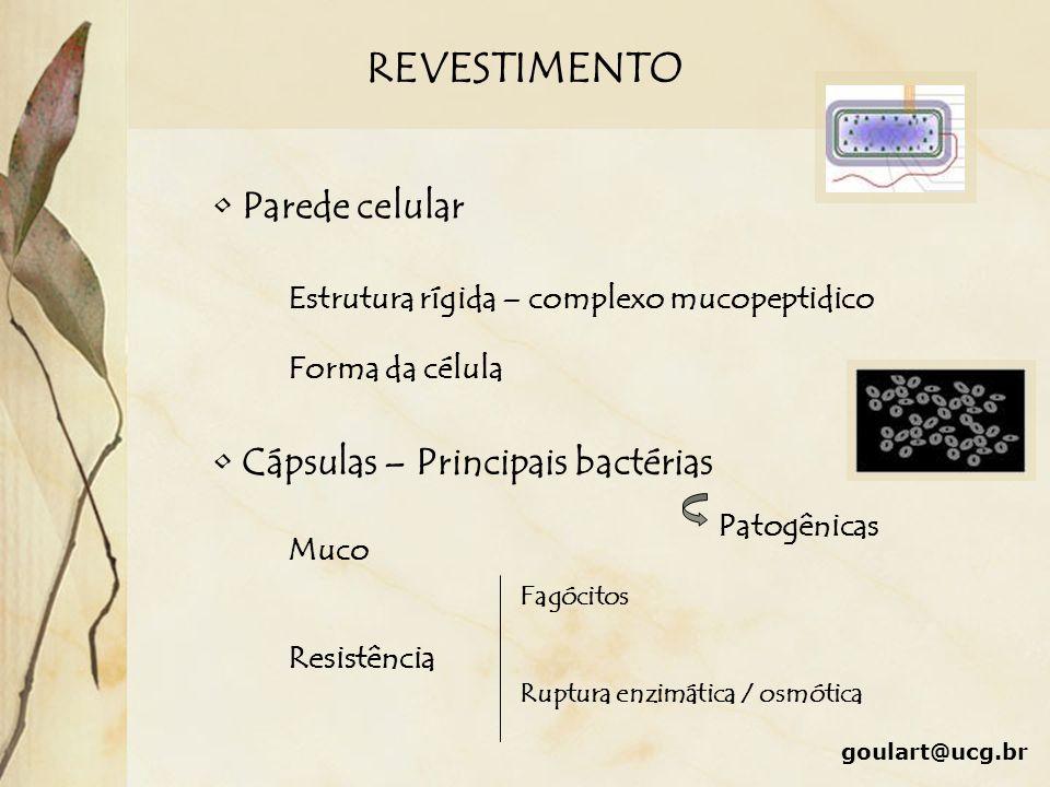 REVESTIMENTO Parede celular Cápsulas – Principais bactérias