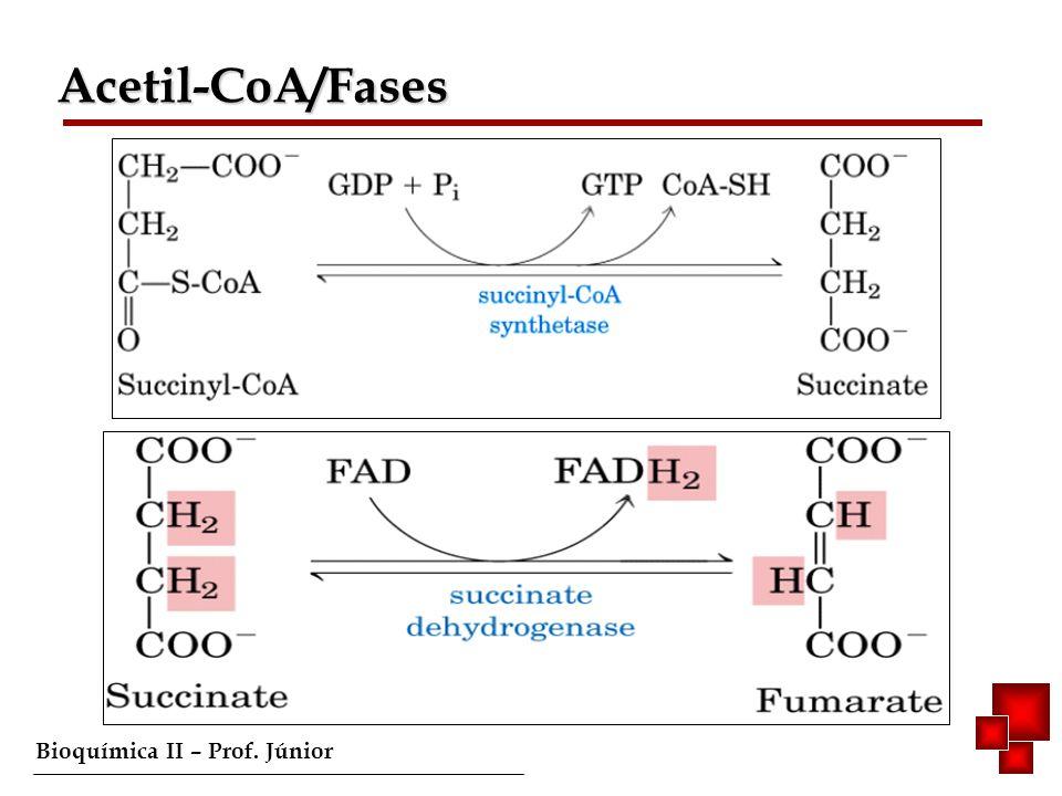 Acetil-CoA/Fases