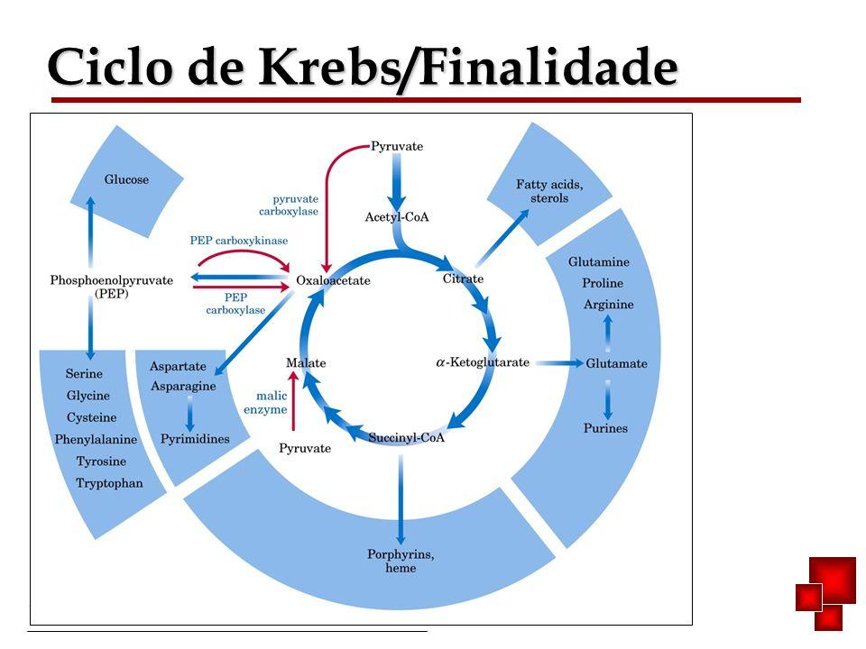 Ciclo de Krebs/Finalidade