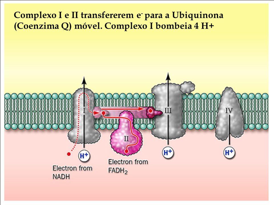 Complexo I e II transfererem e- para a Ubiquinona (Coenzima Q) móvel