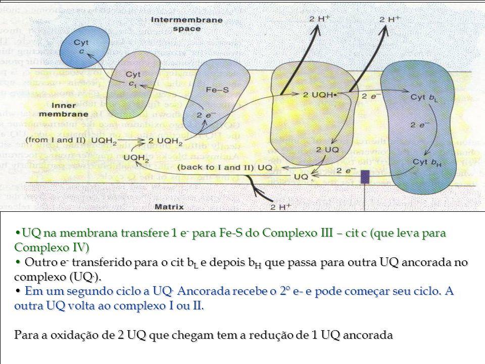 UQ na membrana transfere 1 e- para Fe-S do Complexo III – cit c (que leva para Complexo IV)