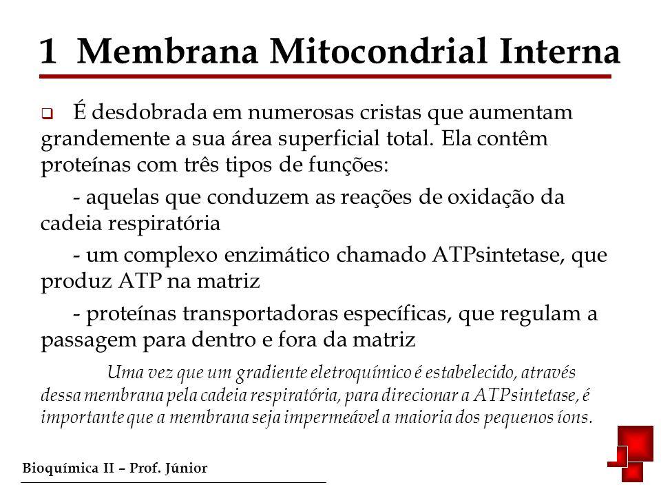 1 Membrana Mitocondrial Interna
