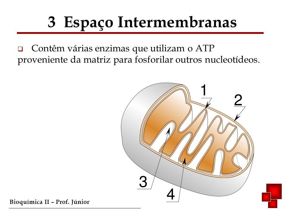 3 Espaço Intermembranas