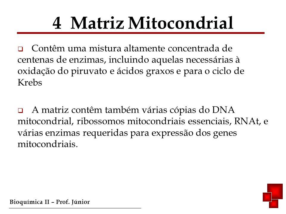 4 Matriz Mitocondrial