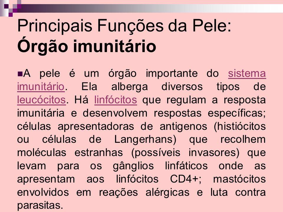 Principais Funções da Pele: Órgão imunitário