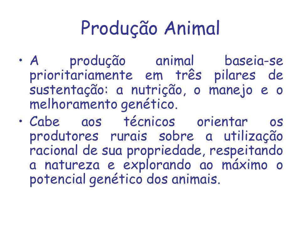 Produção Animal A produção animal baseia-se prioritariamente em três pilares de sustentação: a nutrição, o manejo e o melhoramento genético.