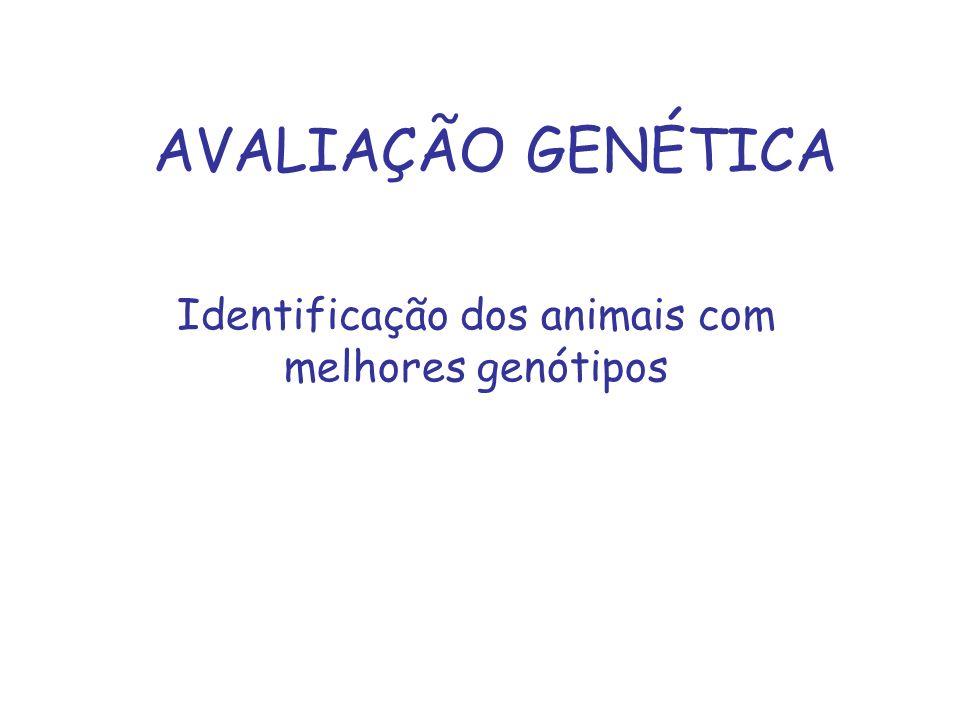 Identificação dos animais com melhores genótipos