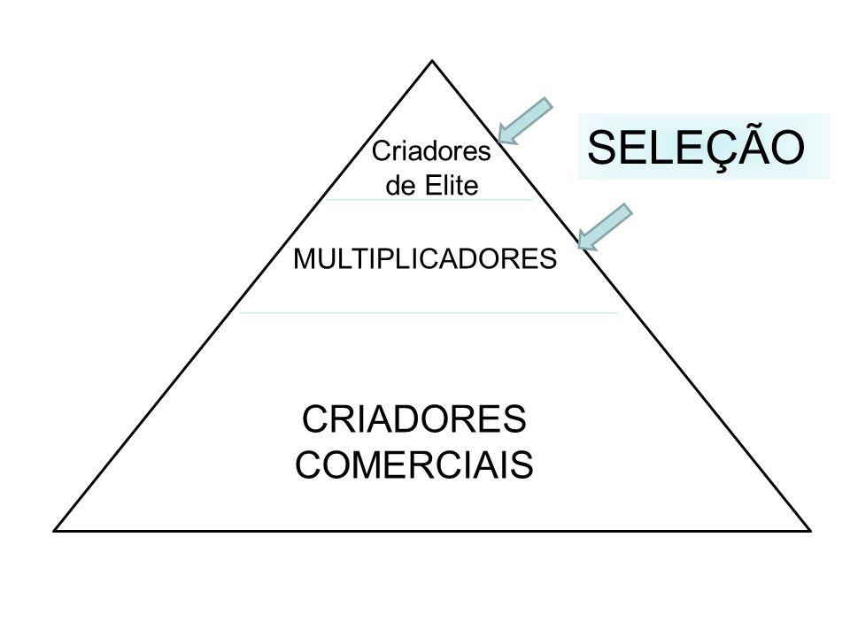 SELEÇÃO Criadores de Elite MULTIPLICADORES CRIADORES COMERCIAIS