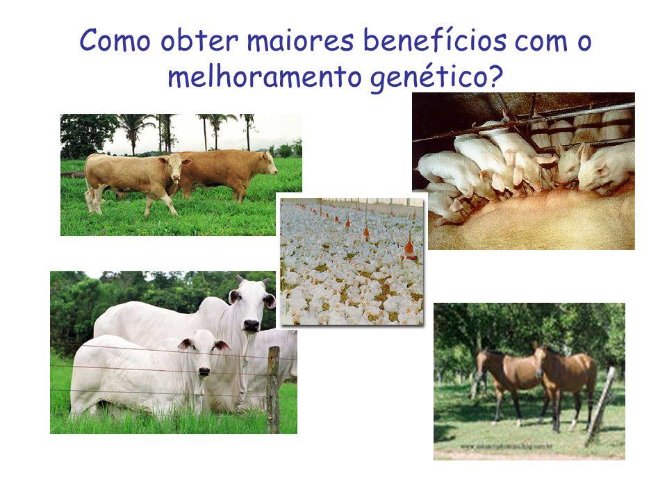 Como obter maiores benefícios com o melhoramento genético