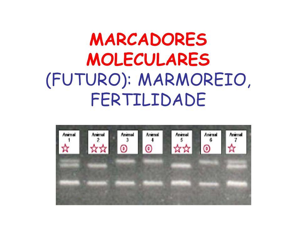 MARCADORES MOLECULARES (FUTURO): MARMOREIO, FERTILIDADE