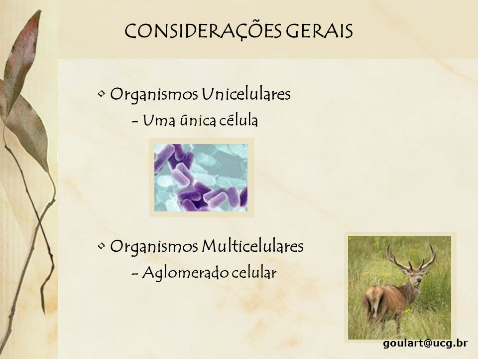 CONSIDERAÇÕES GERAIS Organismos Unicelulares Organismos Multicelulares