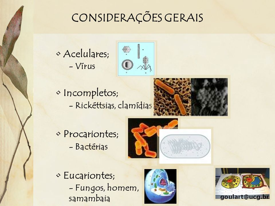 CONSIDERAÇÕES GERAIS Acelulares; Incompletos; Procariontes;