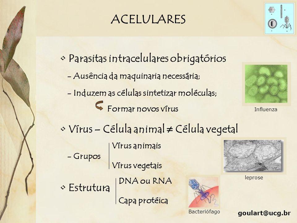 ACELULARES Parasitas intracelulares obrigatórios